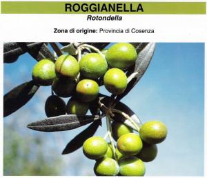 Olivo roggianella